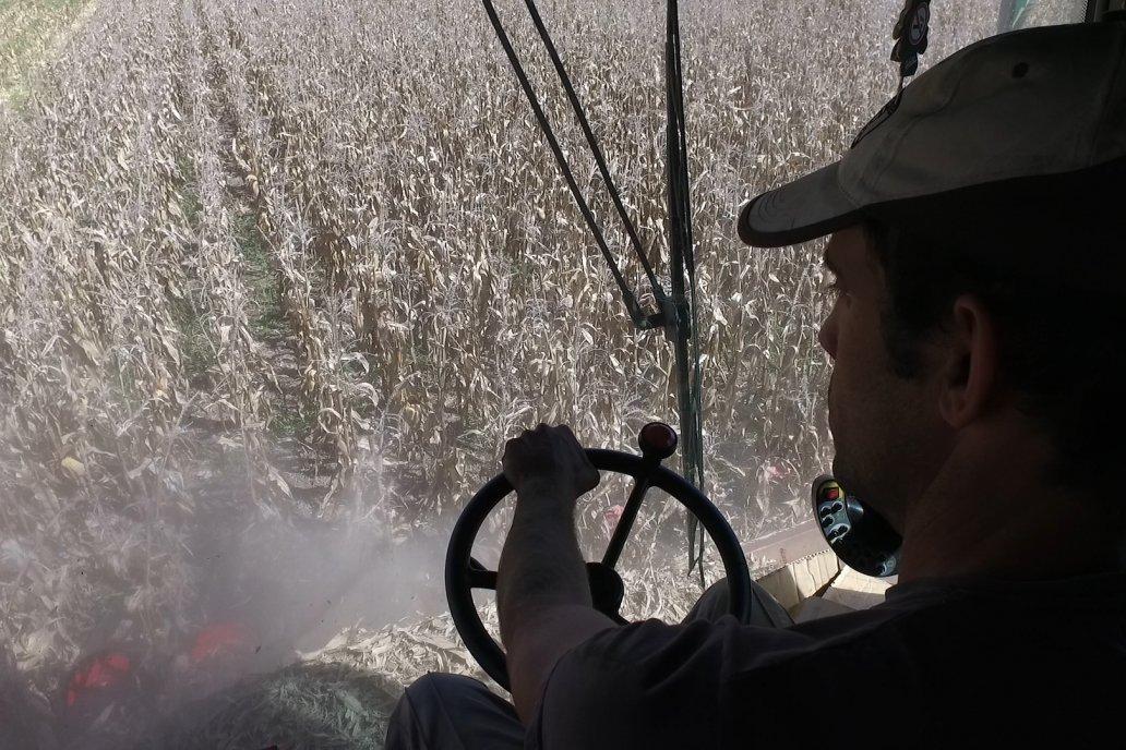 Se cosecharon 1,99 millones de toneladas de maíz sobe 396.500 hectáreas.