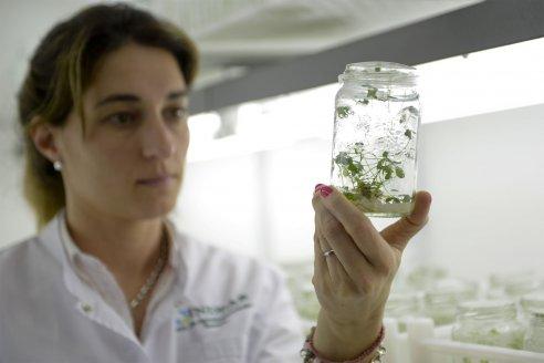La innovación en bioeconomía tiene apoyo en efectivo