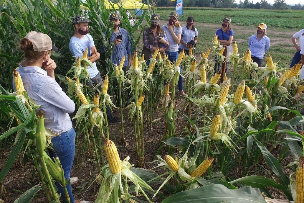 La jornada sumó a profesionales y productores en el ensayo del semillero en INTA