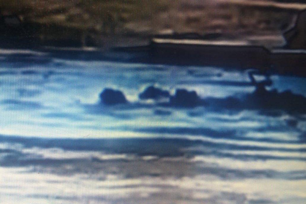 Algunos animales sobrevivieron al salir por sus medios (captura de video)