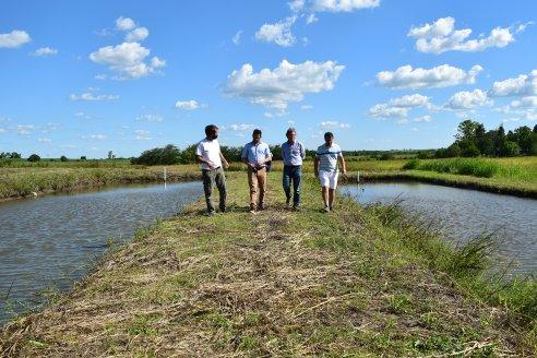 La acuicultura se instala como una alternativa productiva en el campo
