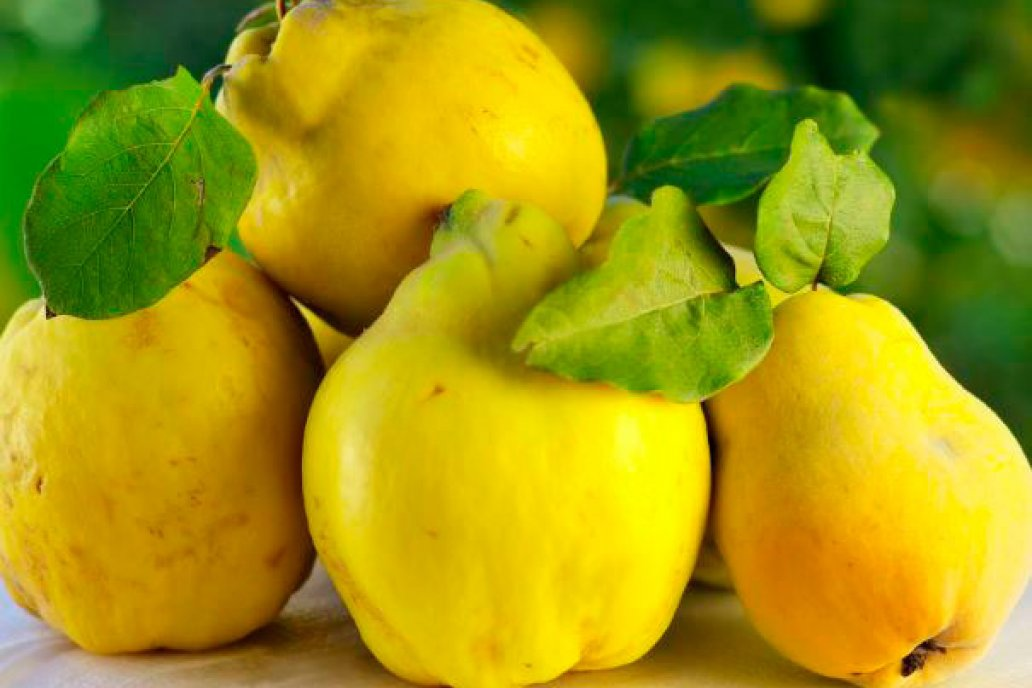 Al comprarlos, lo mejor y más saludable es pedir frutos de piel sana y amarilla