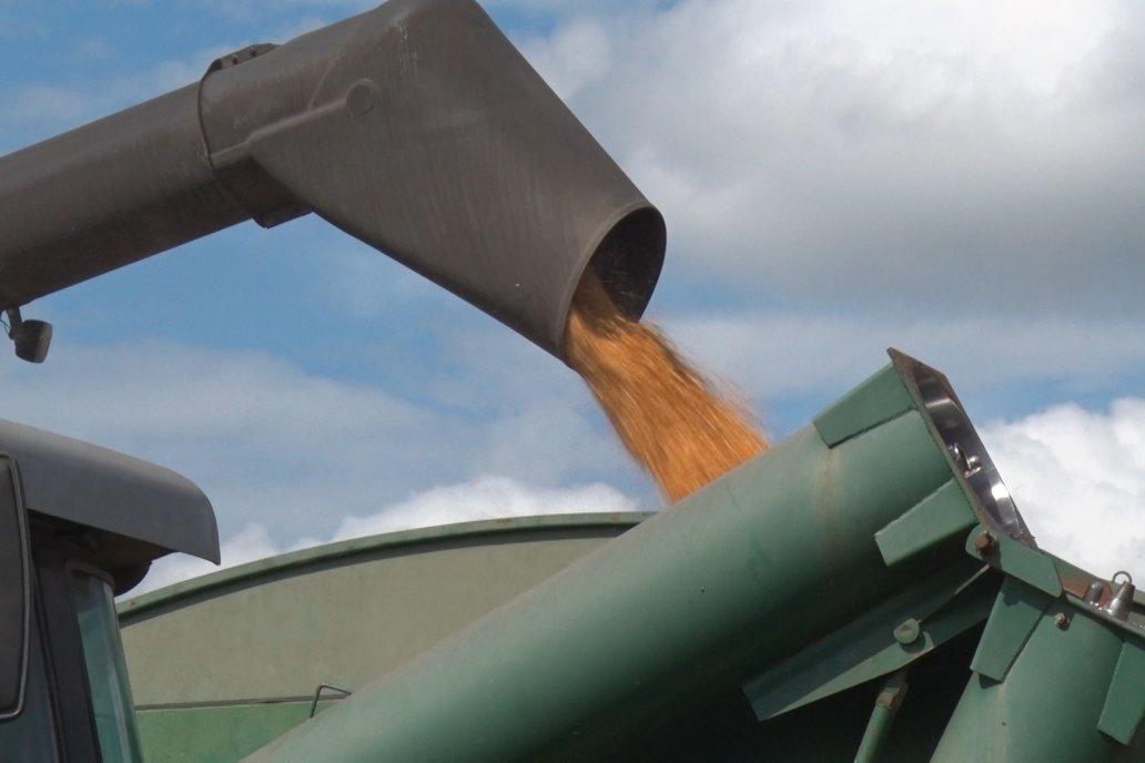 La transformación del maíz en energía verde sigue, pero a los tirones.