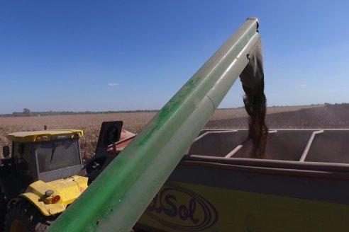 El sorgo entrerriano 2021 rindió en promedio 3.850 kilos por hectárea