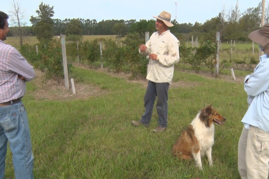 La pareja de ingenieros agrónomos recibió a Campo en Acción en su chacra.