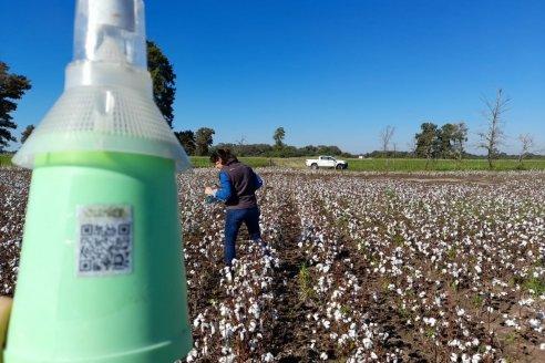 Nueva tecnología aplicada al control del picudo del algodonero