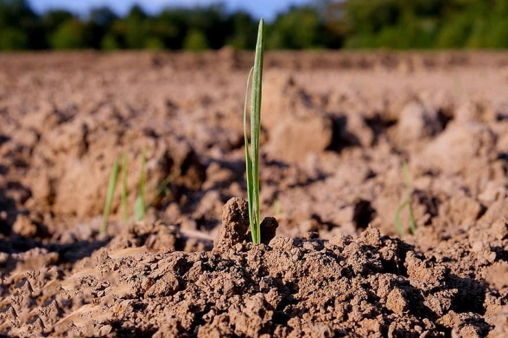 El fenomenal incremento de uso de fertilizantes parece insuficiente.