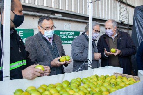 Con la exportación de cítricos a Europa, picó en punta Tucumán