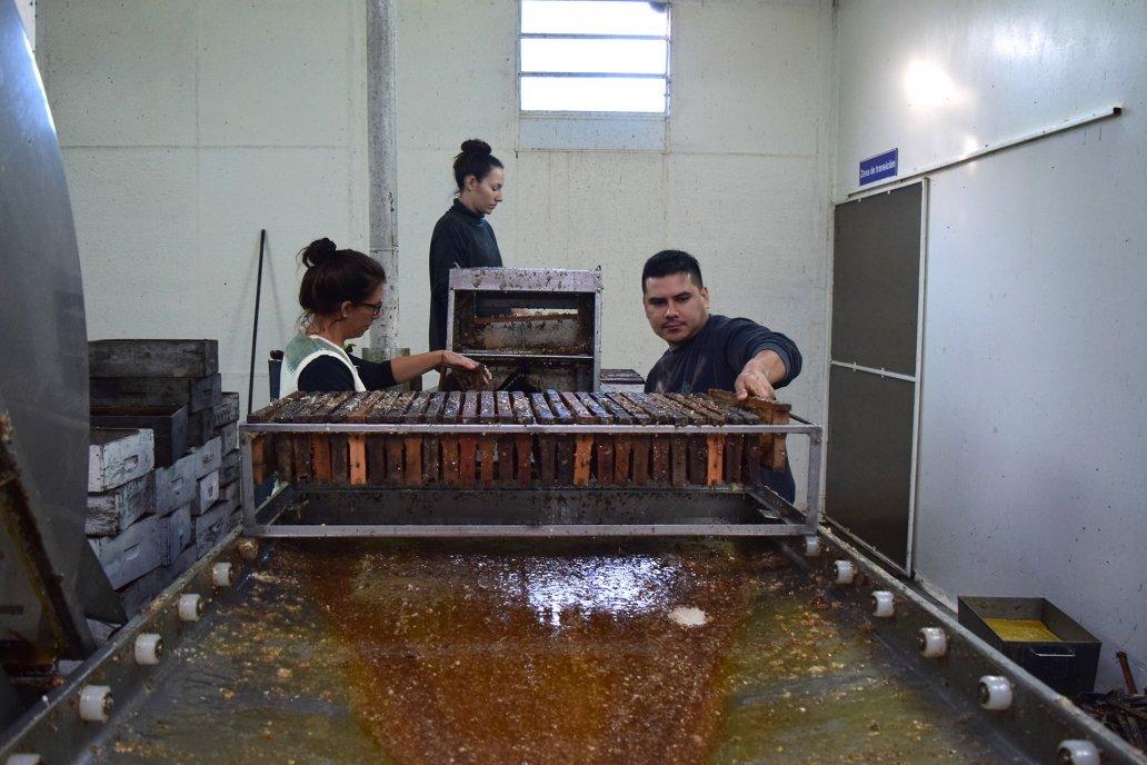Durante 2021 la cooperativa exportó cinco contenedores de miel.