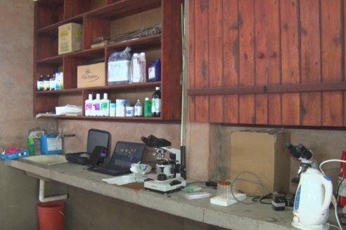 Capacitación de los profesionales de Veterinaria Hernandez - Calidad seminal: en busca del toro atleta de alta perfomance