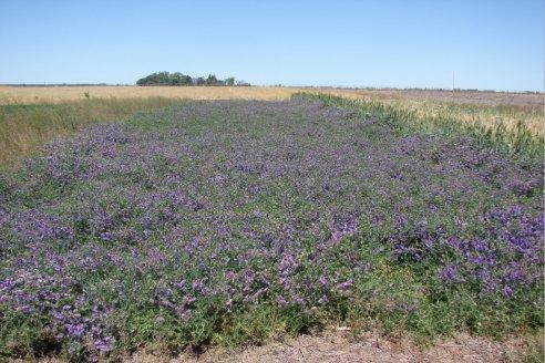 Aapresid abordó el impacto ambiental del uso de herbicidas