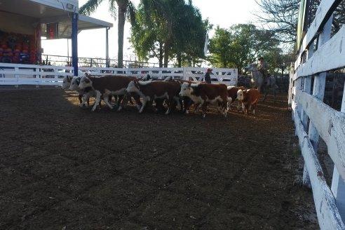Remate Especial 8vo. Aniversario - Hasendados Don Mario SRL - Sociedad Rural Maria Grande