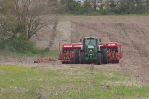 Se deterioró más del 13% la relación insumo-producto para el trigo
