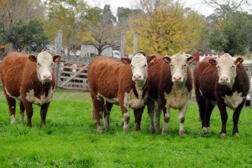Uruguay: la producción de carne crece 18%