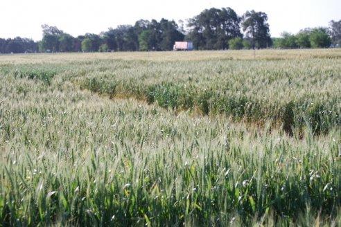 ¿Cómo están los márgenes agrícolas, tras los fuertes movimientos de precios en junio?