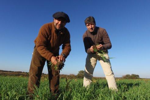 En el campo de los Mercier ensayan con pasturas para recuperar el suelo