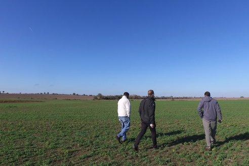 Recorrida por pasturas en campos de Rincón del Nogoyá - Alfalfa Pura y Pasturas Consociadas - Agrofé Campo y Gentos