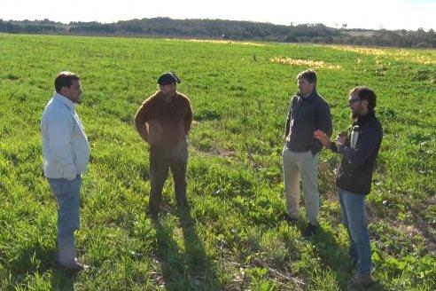 Establecimiento El Progreso - Proyecto Rotaciones - CREA Montoya