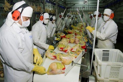 Confirman créditos al 30% para cría de pollos y cerdos