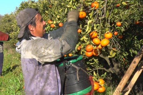 """""""Por la pandemia la gente come frutas y eso nos beneficia"""""""