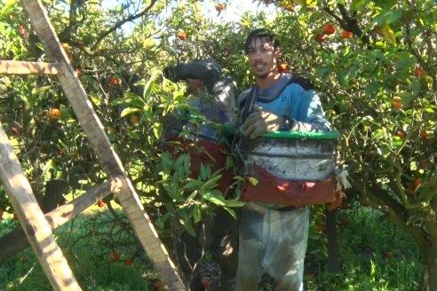 Juan Velazco - Productor Citricola - Quinta San Jorge en Colonia Ayuí