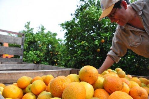 Se concretó la venta de 12.500 toneladas de citrus a Europa