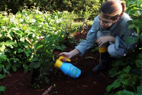Un bioinoculante revoluciona la producción de yerba