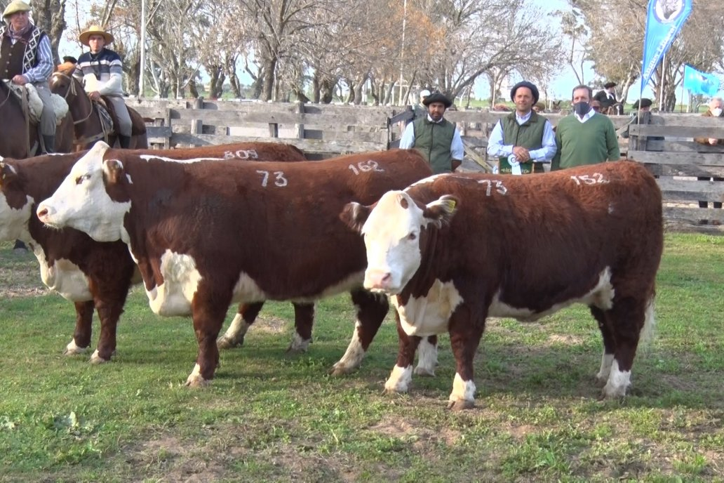 Hereford se floreó en la 128 Expo Ganadera de la Sociedad Rural de Gualeguaychú