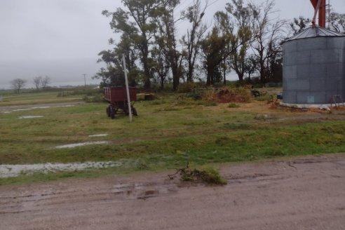 Maiceros entrerrianos celebran porque donde cayó mansa, la lluvia colmó de humedad los suelos