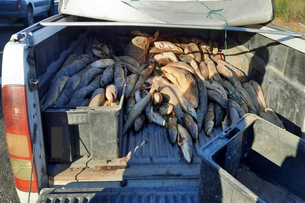 El olor de los pescados trasladados en una camionera advirtió a los gendarmes.