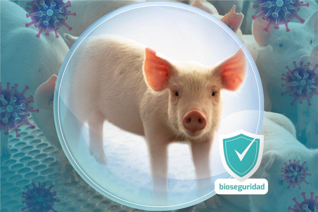 Bioseguridad la herramienta más importante para la prevención de la PPA