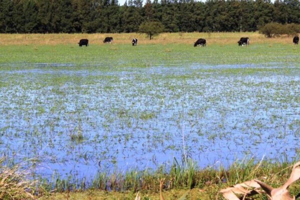 En algunos campos cayeron 250 milímetros y el suelo quedó improductivo.