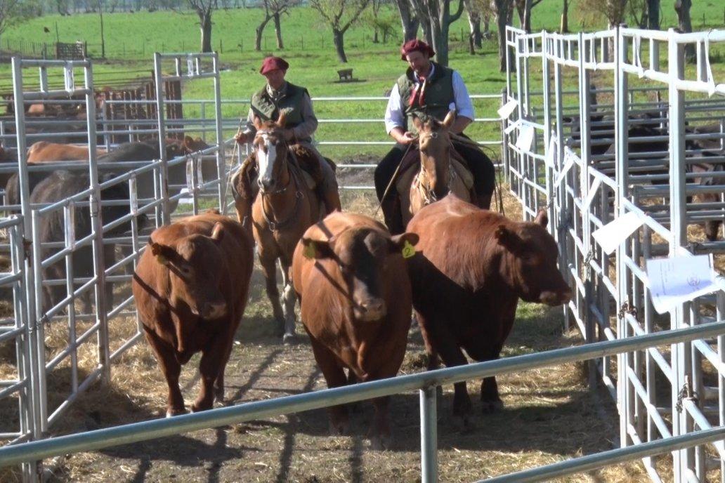 Se vendieron todos los animales puestos a disposición del rematador.