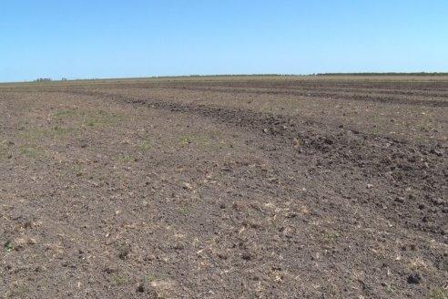 Marcelo Cattaneo - Productor Agropecuario - Siembra de Arroz en Colonia La Mora, Dpto. Villaguay