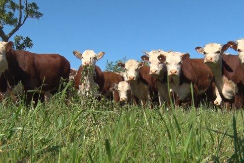 """Matías Pompar: """"La ganadería es rentable haciendo las cosas bien"""""""