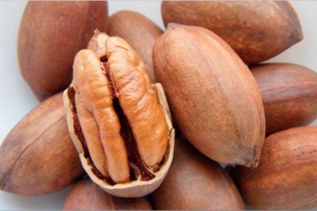 Expertos divulgaron los parámetros de conservación de las nueces regionales.
